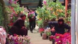 تأثیر ویروس کرونا بر بازار فروش گلهای تازه در کابل
