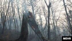 عکس آرشیوی از آتشسوزی در جنگلهای گلستان