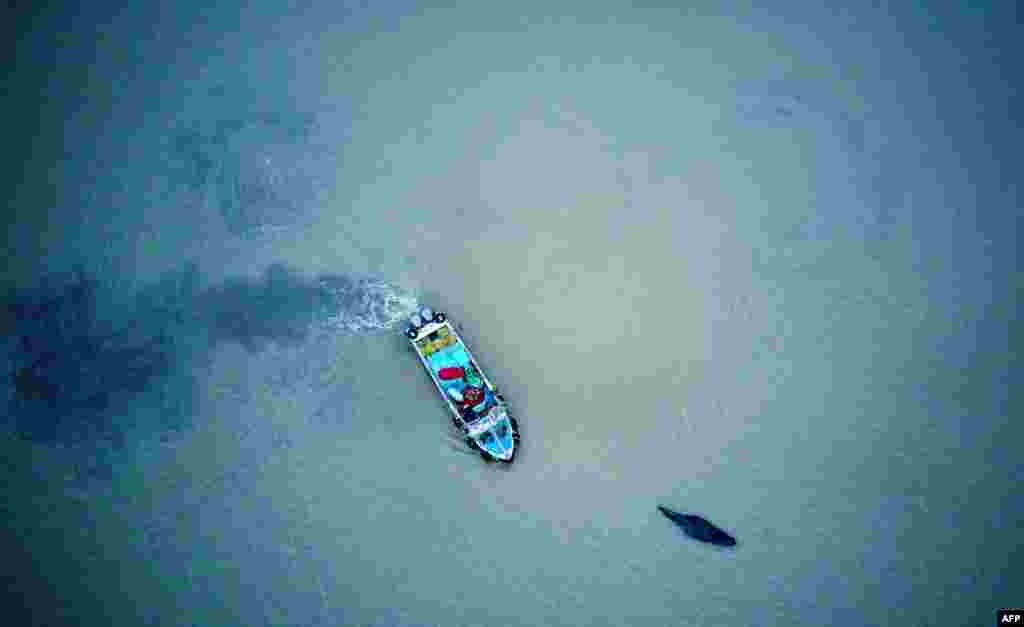 A boat escorts a stranded humpback whale back to deeper waters in Qidong in China's eastern Jiangsu Province. (AFP)
