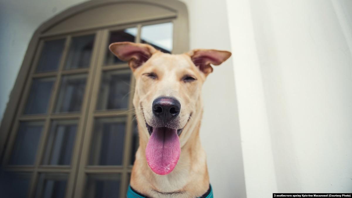 Радио Свобода Daily: Депутат Брагар извинился за свое высказывание о собаке и коммуналку