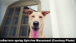 «Слуга народу» Євгеній Брагар вибачився за пораду пенсіонерці: продати «собаку елітної породи», щоб оплатити комунальні послуги