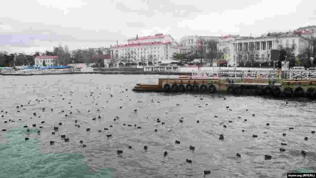 Качки і чайки сховалися в тихій заводі Артилерійської бухти біля поромного причалу