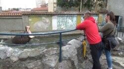 Prvi koraci u Beogradskom zoo vrtu