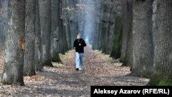 Молодой человек бежит внутри дубовой аллеи в роще Баума. Алматы, 7 декабря 2015 года.