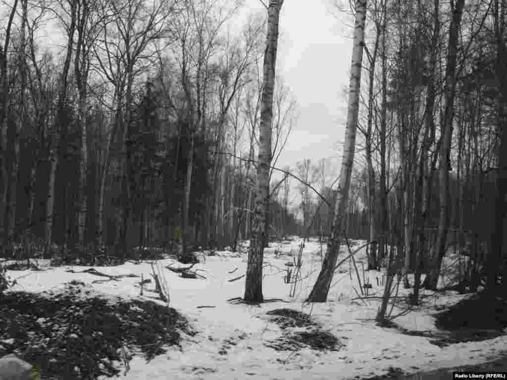 """Просека, прорубленная в Химкинскому лесу компанией """"Российские автомобильные дороги"""" -"""