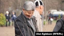Atambaev ko'chat ekish tadbirida