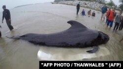 Чорного дельфіна викинуло на узбережжя на півдні Таїланду