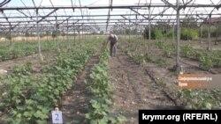 Выращивание хлопка