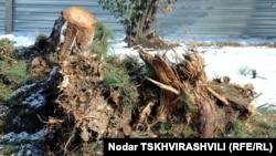 Во вторник организация Центр экологического права опубликовала статистику по вырубкам леса и назвала виновных в уничтожении лесных массивов