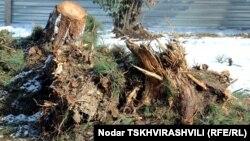 თბილისის ერთ-ერთ პარკში გაჩეხილი ხეები