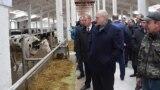 Аляксандар Лукашэнка наведвае кароўнік малочнага комплексу «Сьліжы» ў Шклоўскім раёне, 26 сакавіка