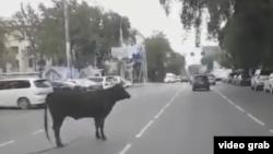 Фото быка, появившееся в социальных сетях.