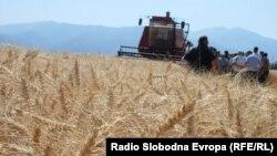 Поле со пченица во Пелагонија