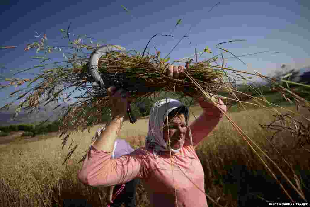An Albanian woman harvests oat in the village of Turaj. (epa-EFE/Valdrin Xhemaj)