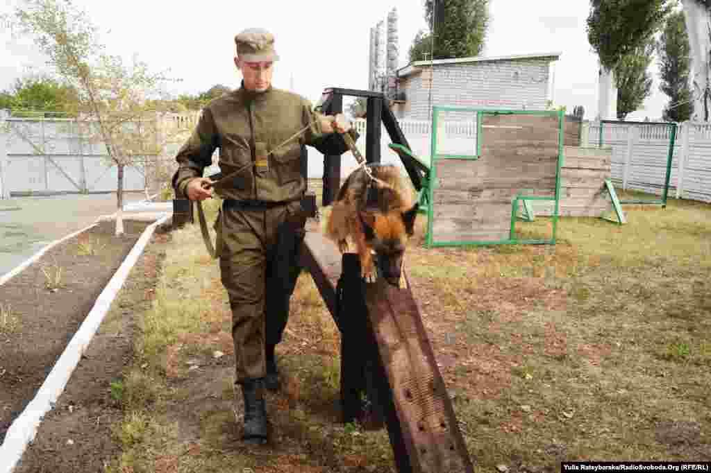 У військовій частині пишаються своїм «собачим містечком»: співробітники утримують і навчають службових собак для охорони масових акацій протесту, роботи на блокпостах, у зоні АТО тощо. Породисті вівчарки стають друзями солдатів
