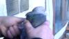 «Краще ми будемо розводити голубів, ніж воювати». Чим живуть зооринки в окупації