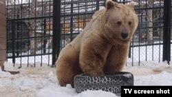 Медведь в красноярском зоопарке (архивное фото)