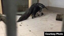 Скрин видео Калининградского зоопарка
