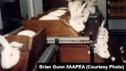 კოსმეტიკური პროდუქციის გამოცდა კურდღლებზე (ბრაიან განის ფოტო, IAAPEA)