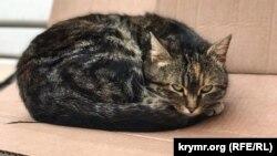 За словами організаторів, підрахунок котів стане першим у світі