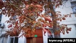 Пожовкле листя у Армянську, вересень 2018
