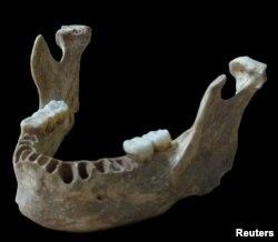Бүгүнкү Румыниянын жеринде 40 000 жыл мурда жашаган эркектин астыңкы жаагы. Лейпцигдеги Макс Планк атындагы Эволюциялык өнүгүү институту. 21-июнь 2015.