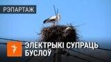 «Вайна» электрыкаў з бусламі каля Белавескай пушчы