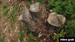 خوگیانی: امید در تنظیم منابع طبیعی بخصوص در قطع جنگلات و غضب علفچرها جلوگیری به عمل آریم.
