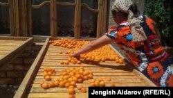 Сушка абрикоса в домашних условиях. Баткенская область, КР.