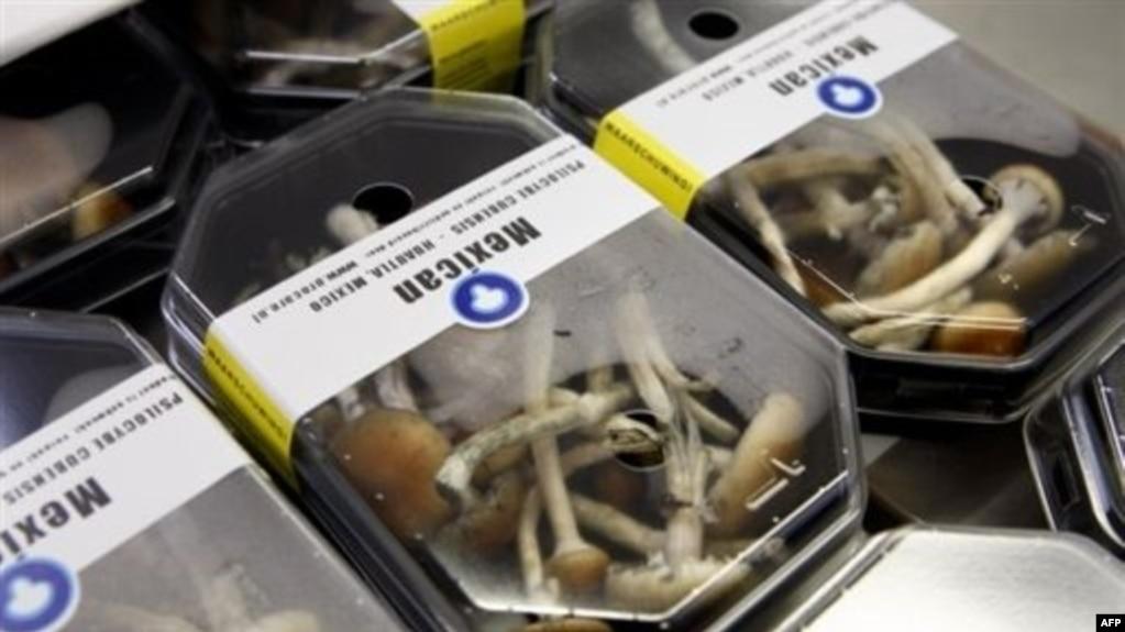 где купить псилоцибиновые грибы цена