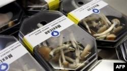 Эти грибы - не шампиньоны. Пока их можно купить в смартшопах - но только в свежем виде, продажа сушеных в Нидерландах запрещена