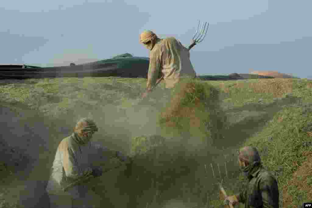 Afghan day laborers unload straw from a truck on the outskirts of Kabul. (AFP/Noorullah Shirzada)