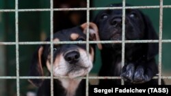 Yakutsk Mayor Sardana Avksentieva later said in an Instagram post that there was a case of rabies at the shelter. (illustrative photo)