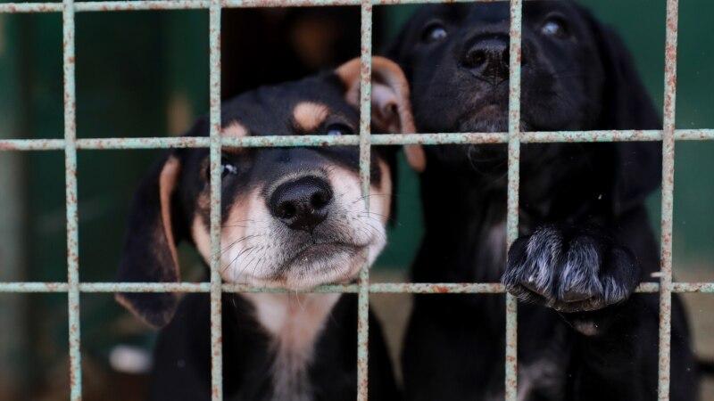 «Худющие, голодные, холодные». В Севастополе намерены проверить деятельность «концлагеря» для собак