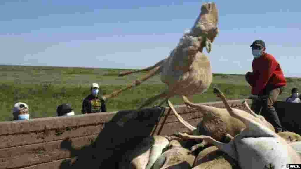 Казахстан. 21–25 мая 2012 года #7