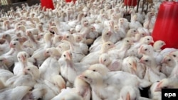 By June 30, there had been 132 cases of H7N9 bird flu reported in China and one case was found in Taiwan.