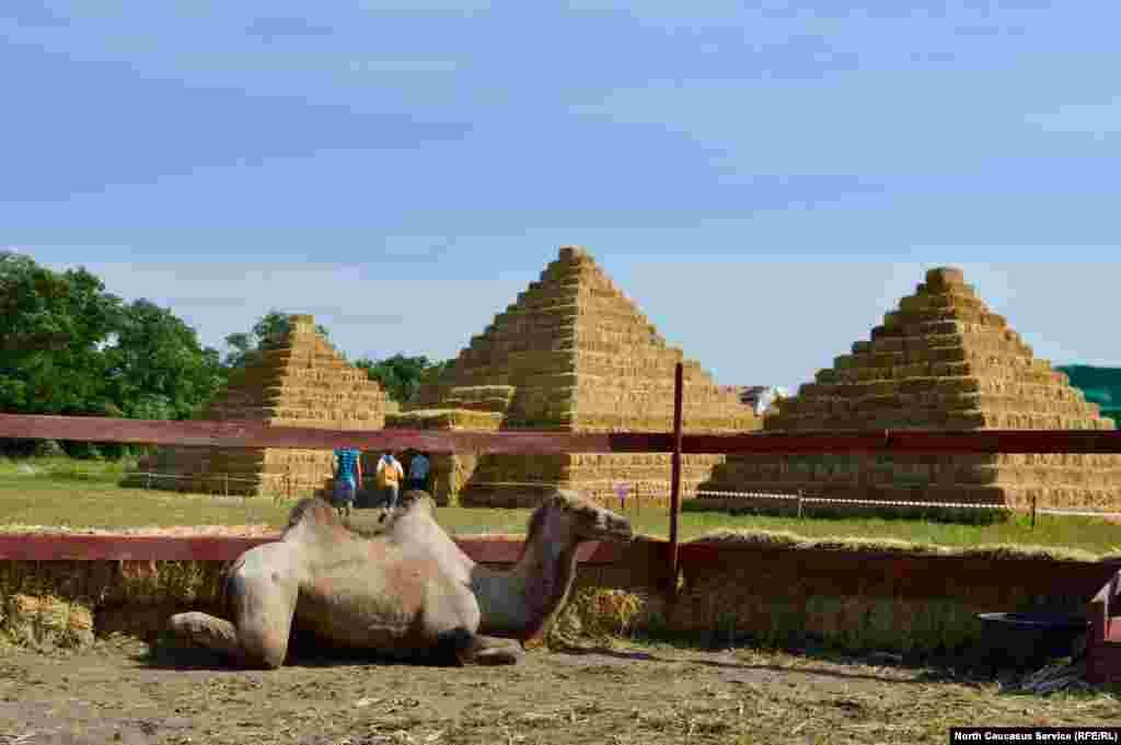 Интересно, а верблюд понял, что пирамиды соломенные?