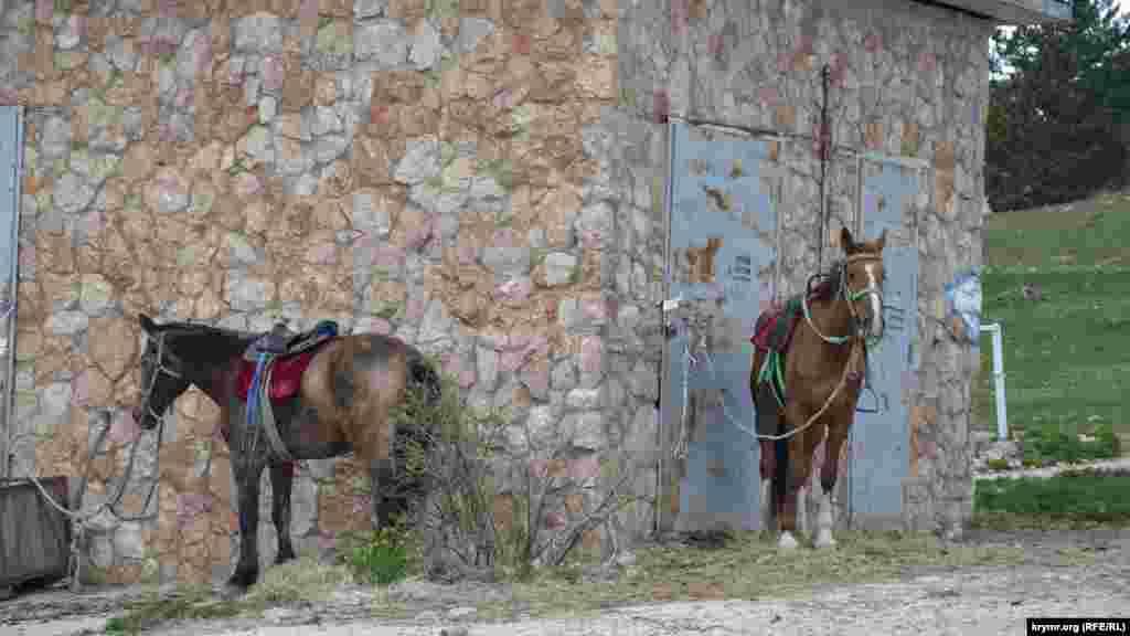 Коні, верблюд і віслючок чекають на охочих покататися