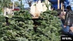 Управление лесного хозяйства официально объявило борьбу с нелегальной вырубкой хвойных деревьев. В отношении черных лесорубов приняты нешуточные штрафные санкции