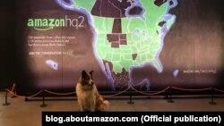 Собака в компании Amazon