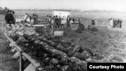 Розкопки на місці масових поховань в урочищі Дем'янів Лаз, Івано-Франківськ, вересень-жовтень 1989 року. Фото з домашнього архіву Зиновія Думи