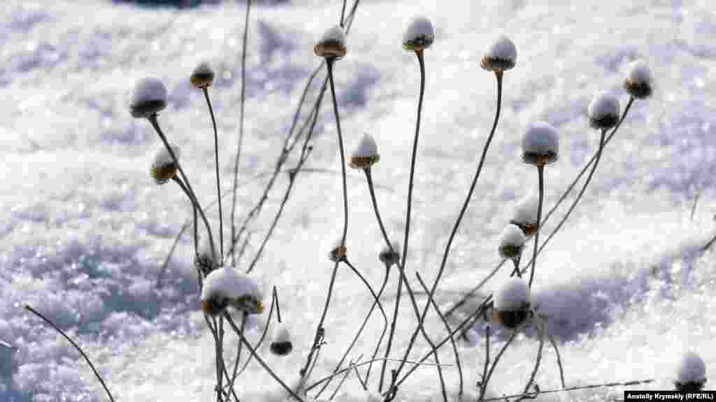 А гірські трави і квіти вкрив сніг