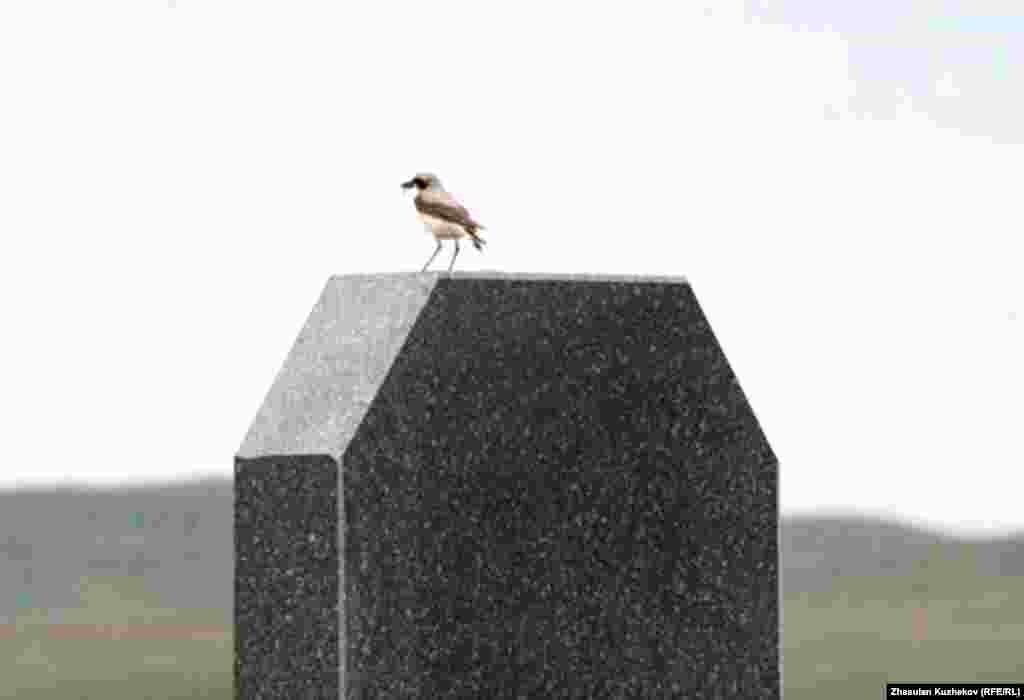 Спасское кладбище военнопленных и репрессированных. Карагандинская область, 31 мая 2011 года. - Спасское кладбище военнопленных и репрессированных. Карагандинская область, 31 мая 2011 года.