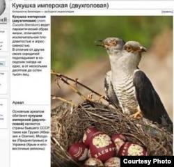 Descrierea imaginii - Cucul imperial (cu două capuri, ca pe stema Rusiei) - are un mod parazitar de viață, este extrem de fertil şi agresiv. Spre deosebire de congenerii săi, lasă nu unul, ci zeci și chiar sute de mii de ouă, în cuiburile vecinilor. Habitatul - țările din fosta URSS, precum Georgia (Abhazia și Osetia de Sud), Moldova (Transnistria), Ucraina (Crimeea)