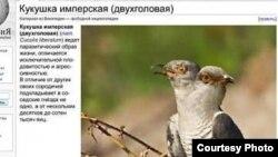 Россия намерена дорого оценить свою помощь Абхазии