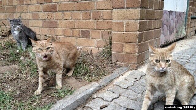 Бяздомныя каты і сабакі. Каб пабачыць дзікіх жывёлаў (льва, буйвала, слана), трэба ехаць ў заапарак ці ў Нацыянальны парк