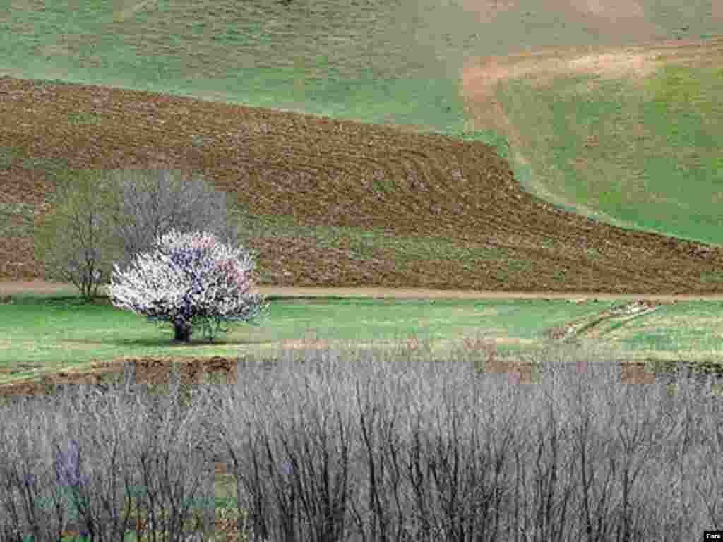 عکسها از خبرگزاری فارس
