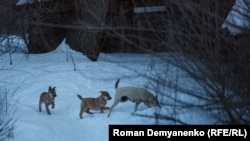 Бродячие собаки (Архивное фото)