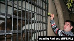 A caged bear in Azerbaijan's Shamakhi district