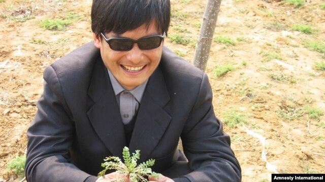 Побег Чена Гуанчена из-под домашнего ареста значительно осложнил предстоящие американо-китайские переговоры